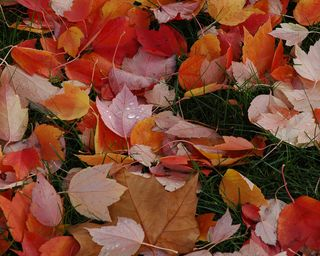 Red-orange-colorful-fall-leaves-by-wonderlane