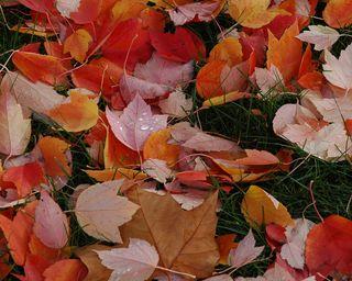 Red-orange-colorful-fall-leaves-by-wonderlane